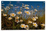 Daisys, Acrylic Print
