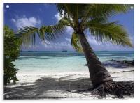 Palm tree, Acrylic Print