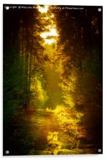Enchanted Forest, Acrylic Print