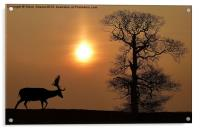 Fallow Deer, Acrylic Print