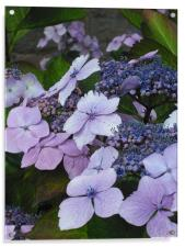 Sweet Purple Paradise!, Acrylic Print