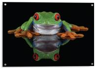 Red Eye Tree frog, Acrylic Print