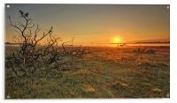 Golden Sunrise New Forest, Acrylic Print