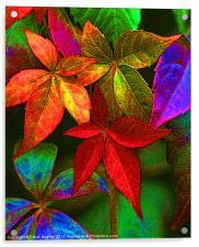 Vibrant multi coloured leaves, Acrylic Print