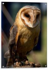 Dusk Dark Beasted Barn Owl, Acrylic Print