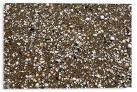 Beach full of Shells, Acrylic Print
