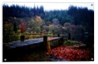 Loch Ard autumn leaves, Acrylic Print