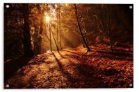 reelig forest walk, Acrylic Print