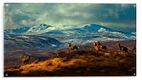 Stags at Strathglass, Acrylic Print