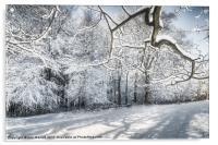 Winter Sparkle, Acrylic Print