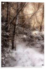 Footsteps in the Snow, Acrylic Print