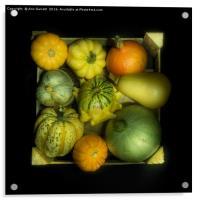 Squash Medley, Acrylic Print