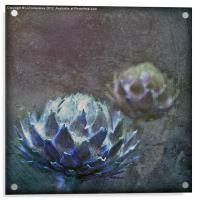 Globe Artichoke, Acrylic Print