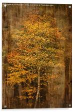 Golden Birch, Acrylic Print