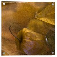 Sweet Gold, Acrylic Print