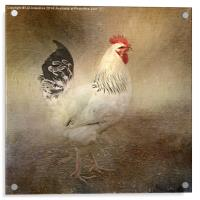 King of the Coop, Acrylic Print