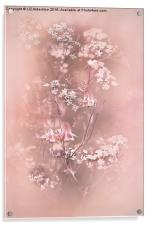 Bouquet in Pastel Pink, Acrylic Print