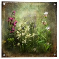 Wildflower Symphony, Acrylic Print