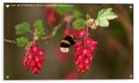 We Need Bees, Acrylic Print