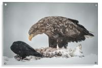 Eagle and Raven, Acrylic Print