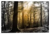 Step into the Light, Acrylic Print