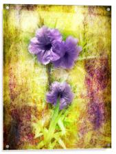 Flowering Mexican Petunias 2, Acrylic Print