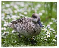 Daisy Duck, Acrylic Print