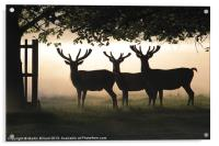 Stags In Silhouette, Acrylic Print