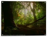 Blaise Woods, Acrylic Print