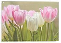 Translucent Tulips, Acrylic Print