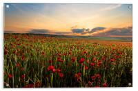 Poppy Fields, Acrylic Print