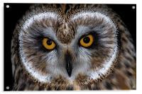Short Eared Owl, Acrylic Print