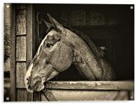 A Horse Of Course - Mono, Acrylic Print
