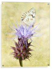 Touch of Elegance, Acrylic Print
