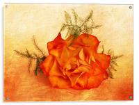 Peachy, Acrylic Print
