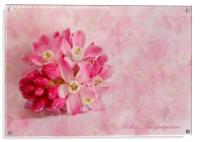 Ribes Sanguineum, Acrylic Print