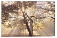 Tree, sun rays, early mist, Acrylic Print