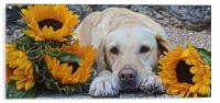 My Labrador My little Sunflower, Acrylic Print