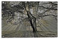 Autumn into Winter Sun Rays, Acrylic Print