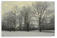 Trees winter season scene                         , Acrylic Print