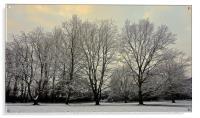 Winter scene at the park                          , Acrylic Print