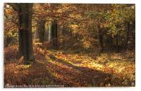 Beautiful woods Cannock, Acrylic Print