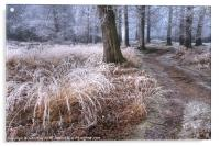 Forest frost, Acrylic Print