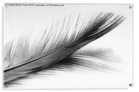 Feather and it's reflection in B&W, Acrylic Print
