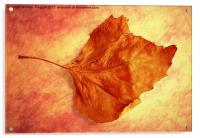 Autumn Cometh, Acrylic Print