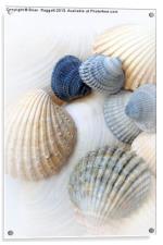 Just Sea Shells, Acrylic Print