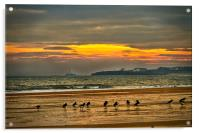 Oystercatchers on the beach, Acrylic Print
