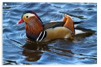 Mandarin Duck, Acrylic Print
