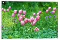 Pink Tulips 1 , Acrylic Print