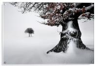 Oak in the snow, Acrylic Print